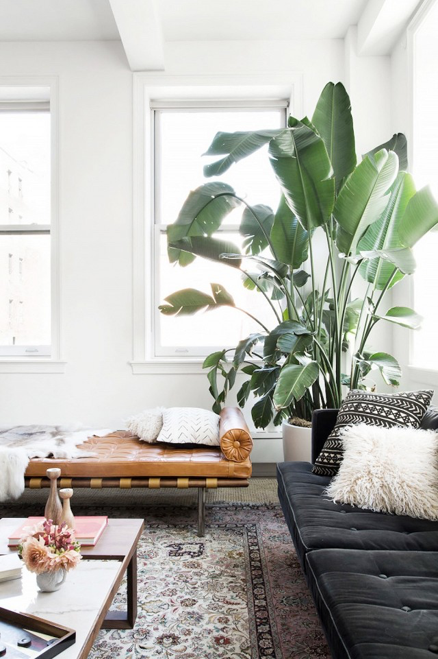 Tropical themed living room large indoor plant