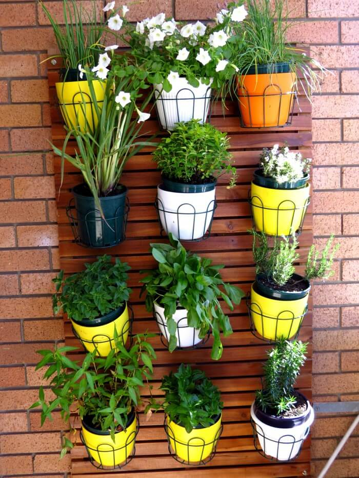 colorful vertical garden with houseplants