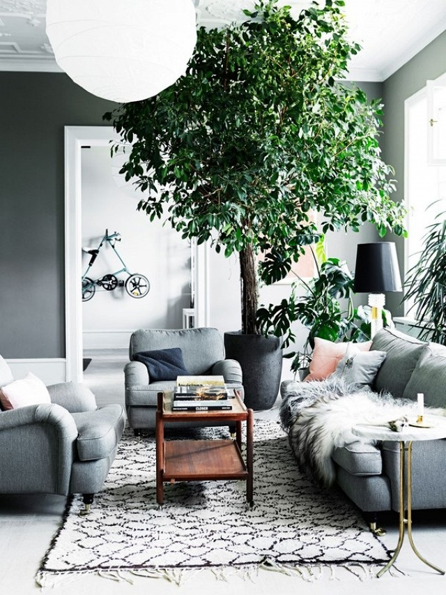 Cozy gray living room large plant