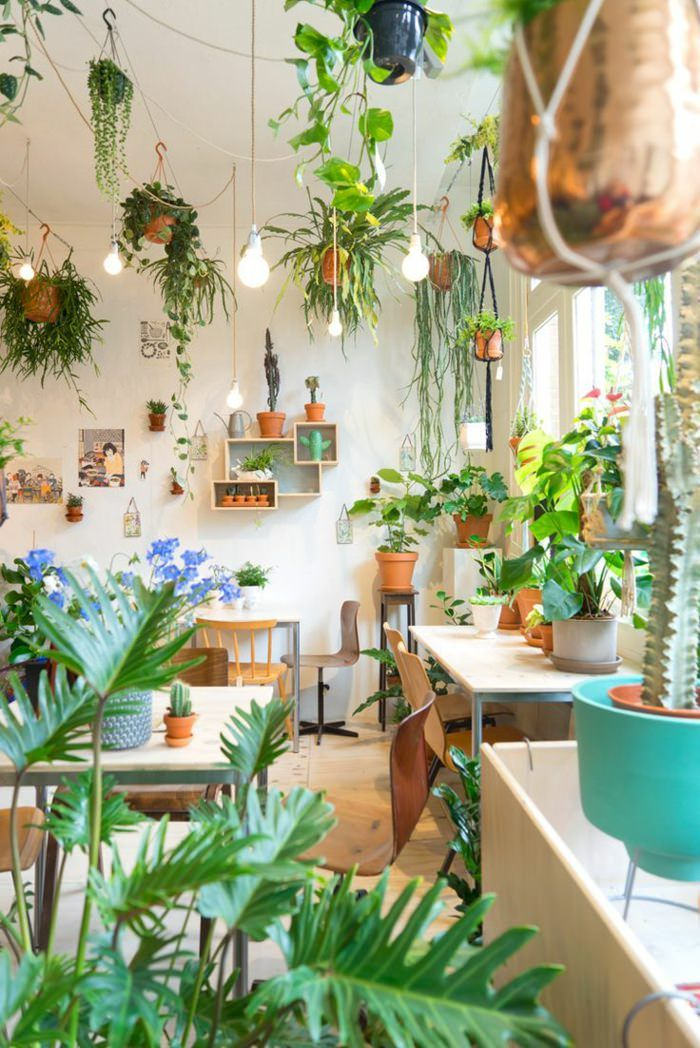Decorate the house's living room with plants