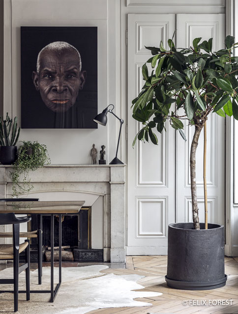 Great plant decor near mantelpiece