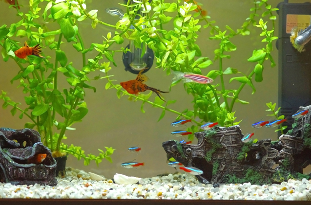 How to Safely Clean Your Tank and Aquarium Decoratio