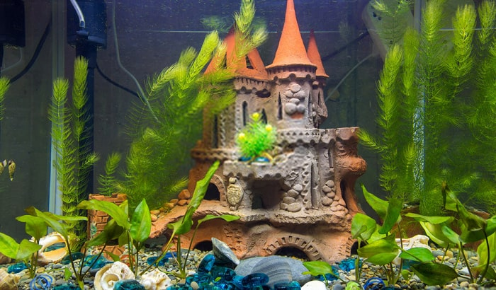 10 Best Aquarium Decorations Reviewed and Rated in 20