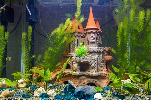 DIY Decorations That Are Safe for a Freshwater Fish Ta