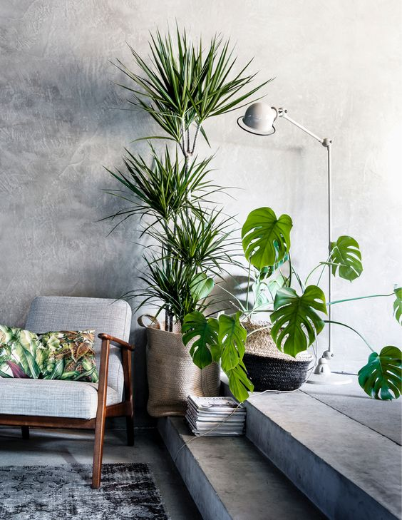 10 Beautiful Ways To Decorate Indoor Plant in Living Ro