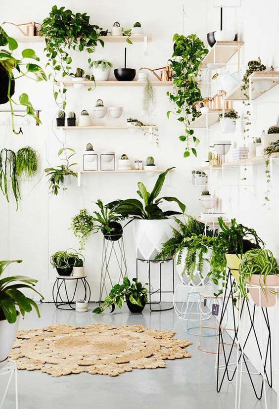 7 Different Way to Indoor Plants Decoration Ideas in Living Ro