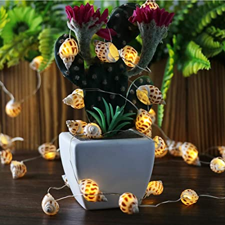 Amazon.com : Natural Shell Battery String Lights Led Warm White .