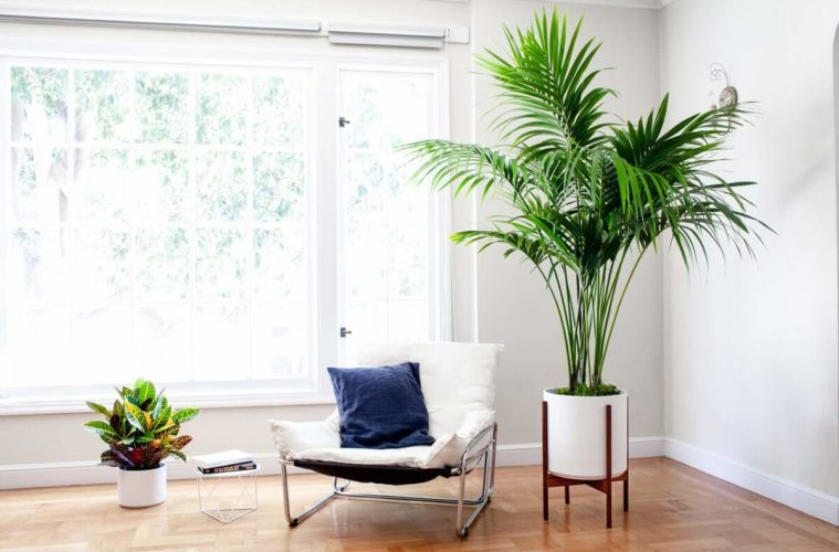 21 Tall Indoor Plants With Big Leaves - The Architecture Desig