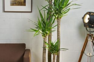 Incorporate Plants Into Your Living Room Decorating Ideas-A .