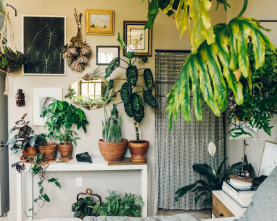 Corner Decoration Pieces – Indoor Plants For Living Ro