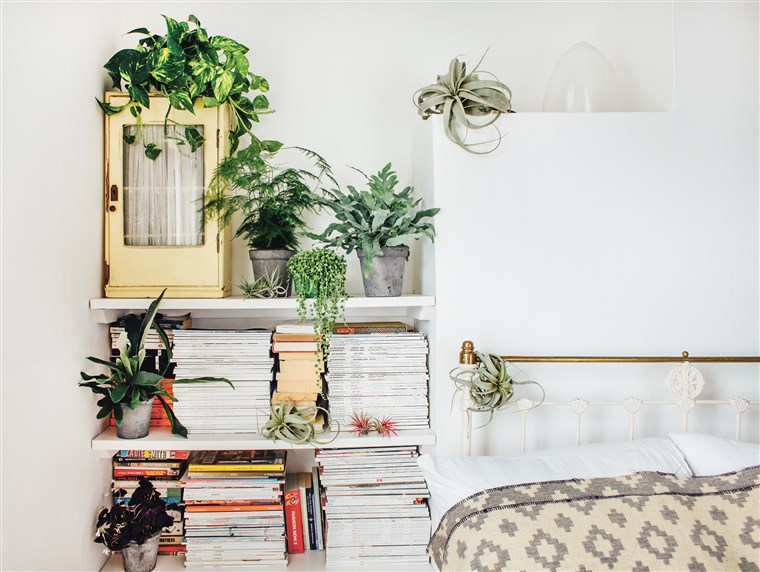 Why Indoor Plants Make You Feel Bett