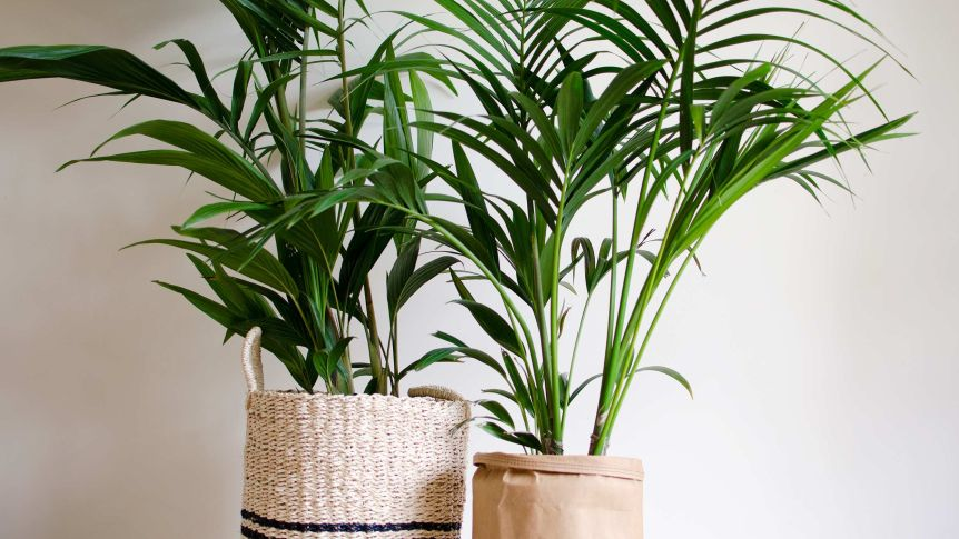 Indoor plants that will purify the air in your home or office .