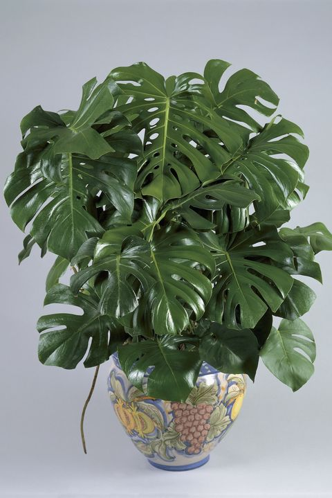 25 Best Indoor Plants For Apartments - Low-Maintenance Plants For .