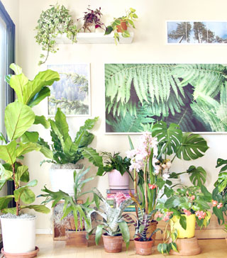 18 Most Beautiful Indoor Plants ( & 5 Easy Care Tips! ) - A Piece .