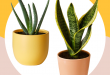 10 Best Indoor Plants For Your Home — Air-Purifying Plan