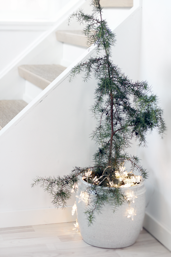 Minimalist Christmas (With images) | Potted christmas trees .