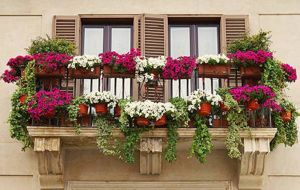 Hanging balcony plants and blooming flowers for a spectacular exteri