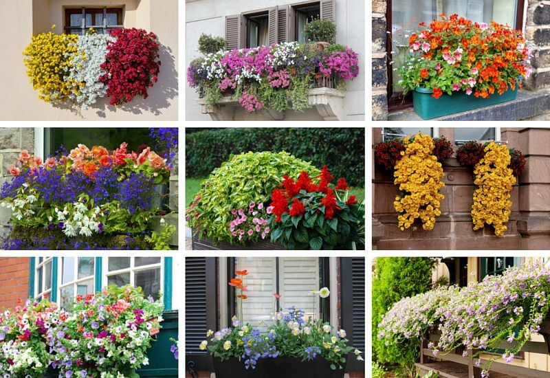 40 Window and Balcony Flower Box Ideas (PHOTOS) - Home Stratosphe