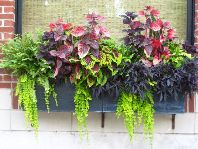 great idea planters for north facing balcony | Window box flowers .
